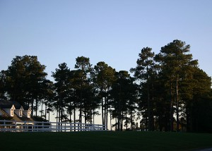Carolina Pines